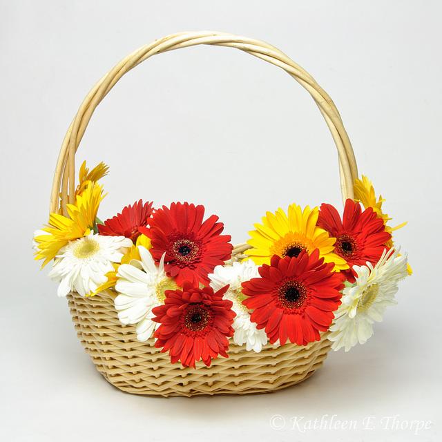 Gerbera Daisy Basket