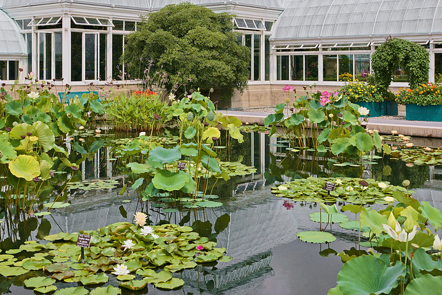 Giverny on the Hudson – New York Botanical Garden, New York, New York