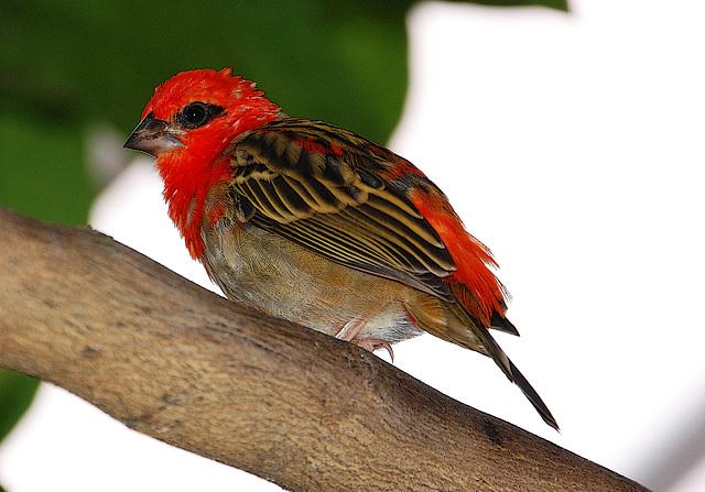 Petit oiseau des îles