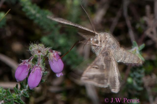Vlinder-5072