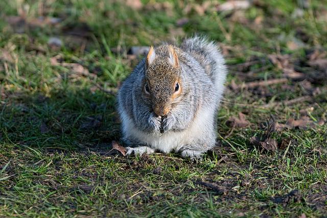 Squirrel in winter light (b)
