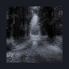 Mildenburg Forest