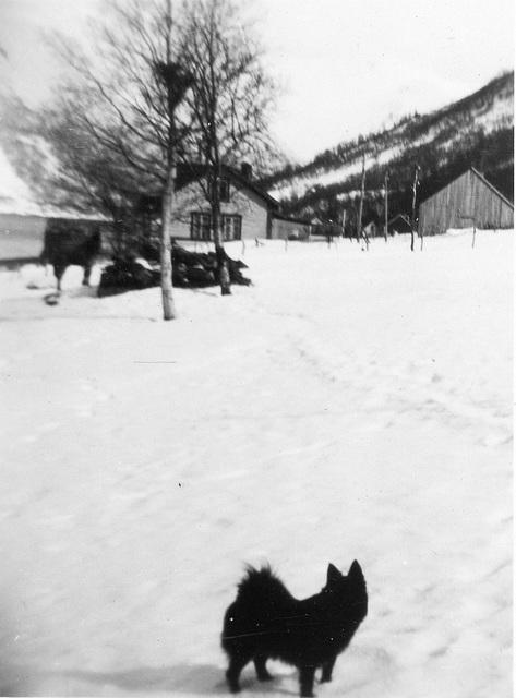 (129) Hunden Pink på Bergum