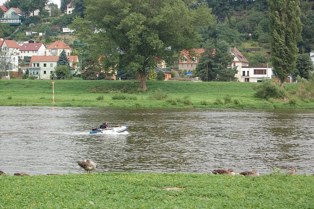 motorboato sur rivero Elbo (Motorboot auf der Elbe)