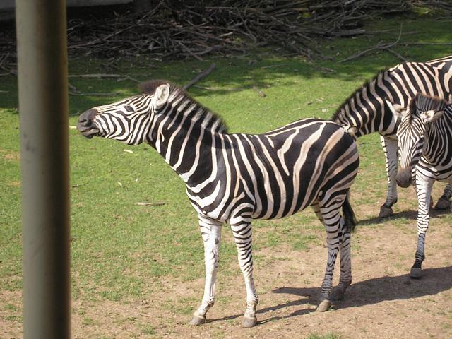 Safari - Dvůr Králové