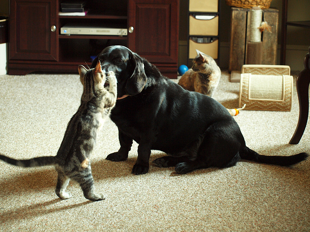 Hush, goggie!
