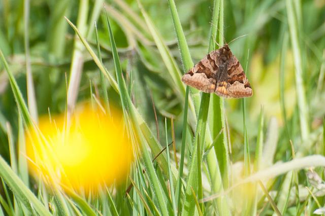 vlinder-8148