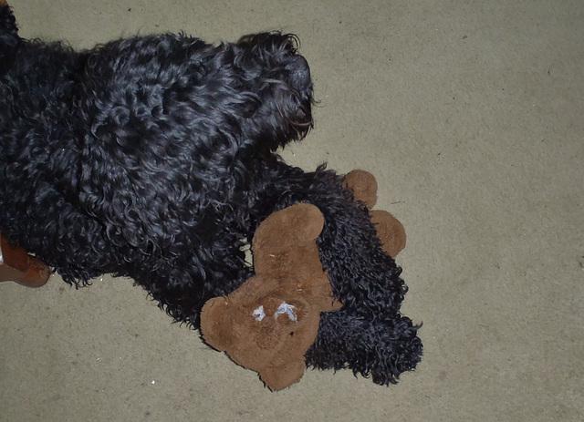 Fonzie & Teddy