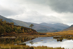 The Tree, Glen Strathfarrar, Scottish Highlands