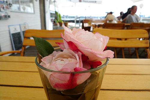 rose-1160856