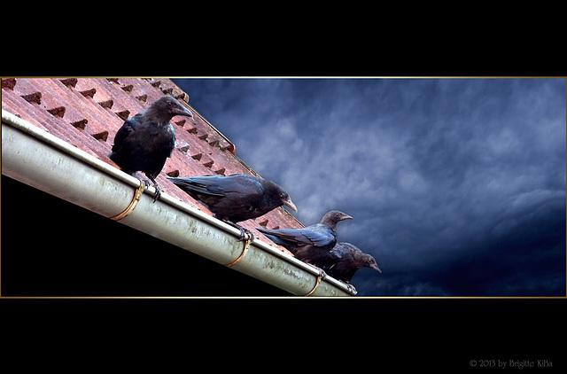Die Vögel ⁀˅⁀