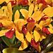 Orchid Jungle – Pennsylvania Convention Center, Philadelphia, Pennsylvania