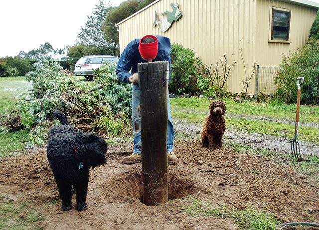 Juan digging out the gatepost