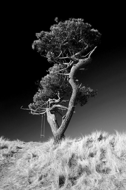 The Tree Swing, Palm Beach, Golspie, Sutherland, Scottish Highlands