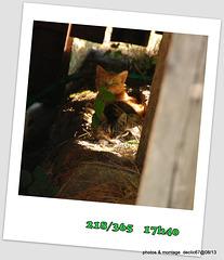 05/08   premiers contacte avec les chats...