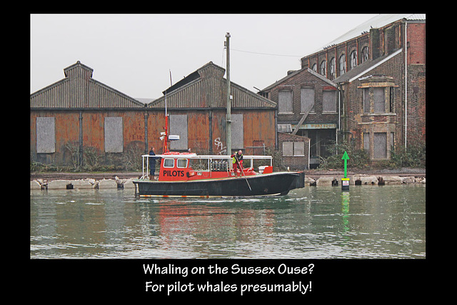 Whaling on the Ouse? - 15.11.2012