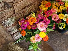 Der fröhliche Blumenladen ~
