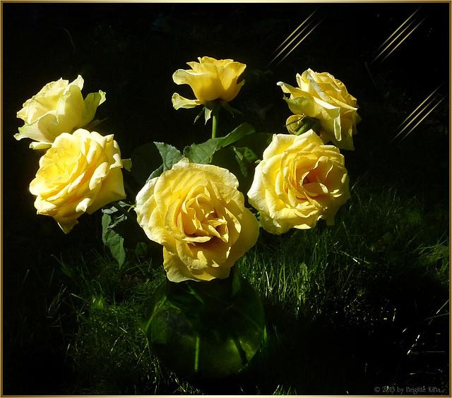 roses for bobbie ❤
