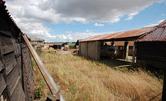 Dukes Farm, Bungay, Suffolk (12)