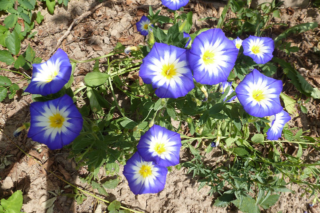 Kleine Glücksmomente - etaj feliĉaj momentoj / In meinem Garten - blau - weiß - gelb / en mia ĝardeno blua - alba - flava