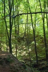 arbolumo en senarbejo (Waldlicht in Lichtung)