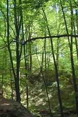 altaj junaj arboj (hohe junge Bäume)