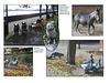 Animals on Thames Path Rotherhithe