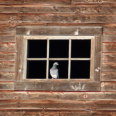 A face at the window, but not an owl : )