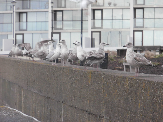 The seagulls were waiting for food
