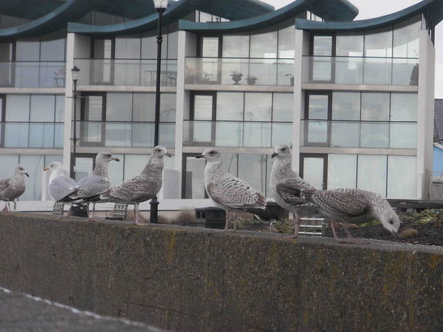 This last year has been good for baby seagulls