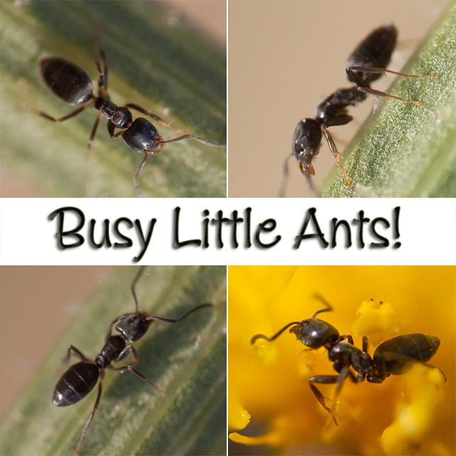Busy Little Ants!