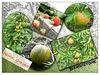 Fruit collage  - Manor Garden  - Bishopstone - 13.9.2010
