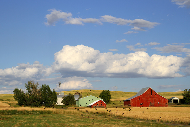 Eastern Washington Farm