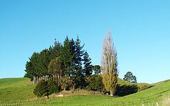Nice group of trees.