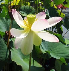 """Sacred Bloom"" (Explored)"