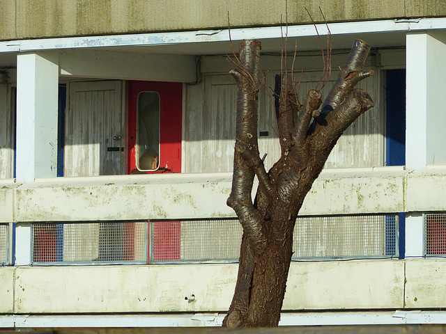 A Tree and a Red Door - 22 January 2014