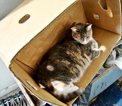 Honey just loves a box
