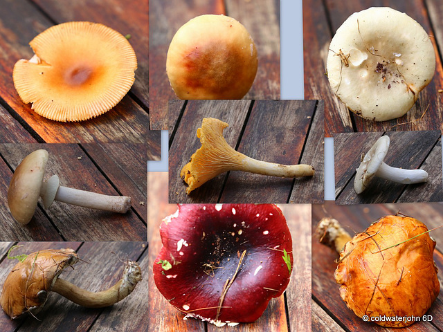 Pick your poison - only one is edible: do you recognize it?