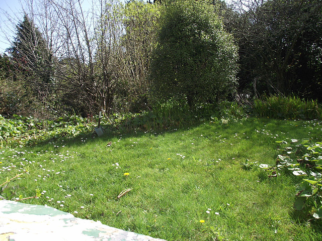 My top garden is very congested with weeds before I sorted them out