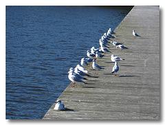 Pretty Birds All In A Row