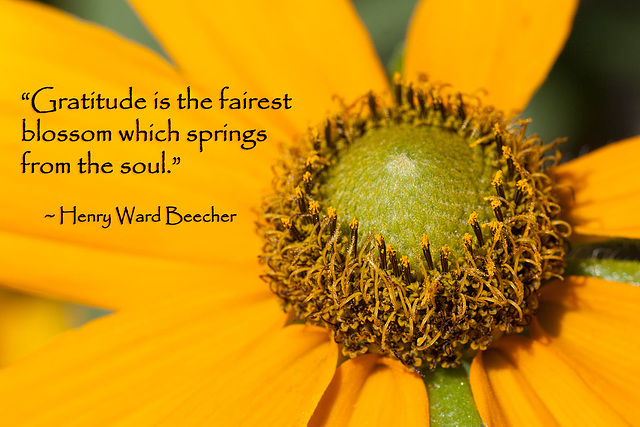 "235/365: ""Gratitude is the fairest blossom which springs from the soul."" ~ Henry Ward Beecher"