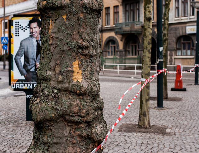 The ad and the tree