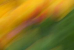 Tulip Movement...