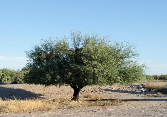 Ehrenberg, AZ: Hualapai concentration camp site (0732)