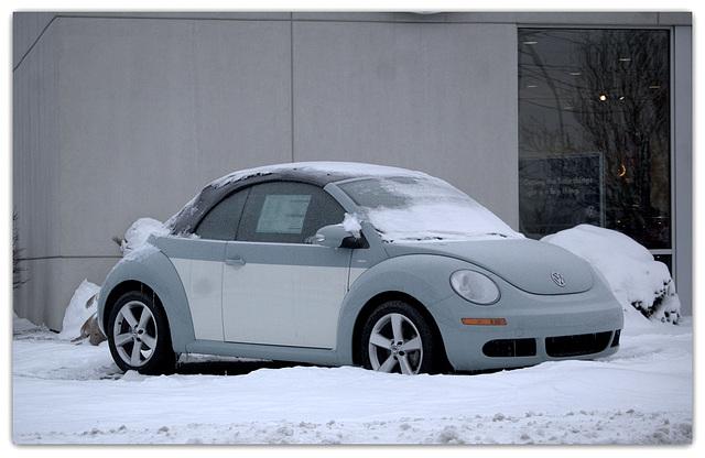 Volks - Beetle