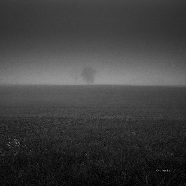 fog on a hill #3