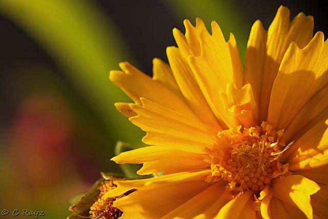 Patio Life: Sunburst