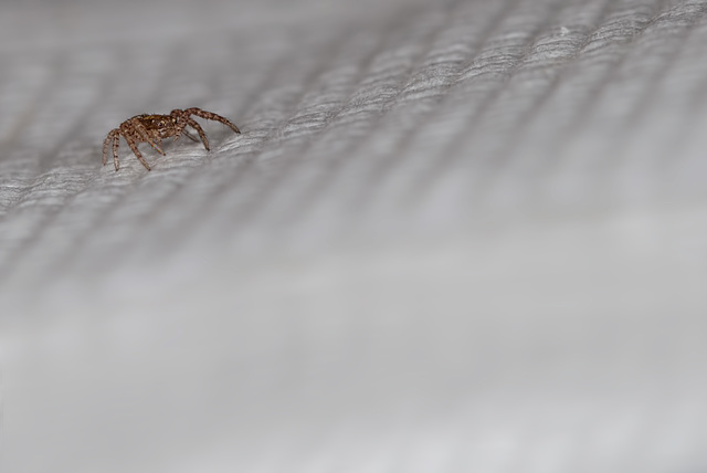 Tiny 1mm Spider on Paper Napkin