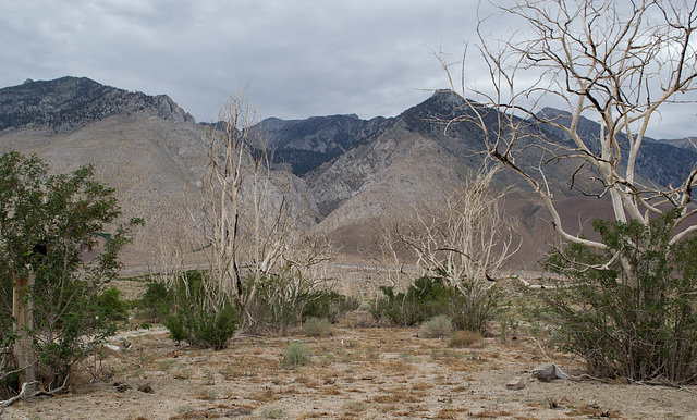 Division Creek, CA old US 395  (0362)