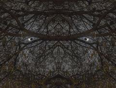 Simetría: la luna nos mira detrás de la arboleda